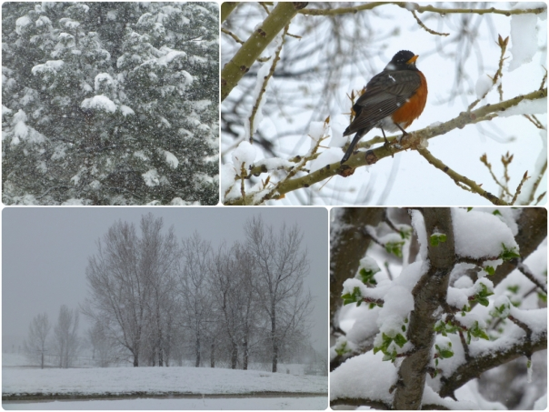A collage of 4 pictures showing snowy scenes from May Day 2013, in central Colorado